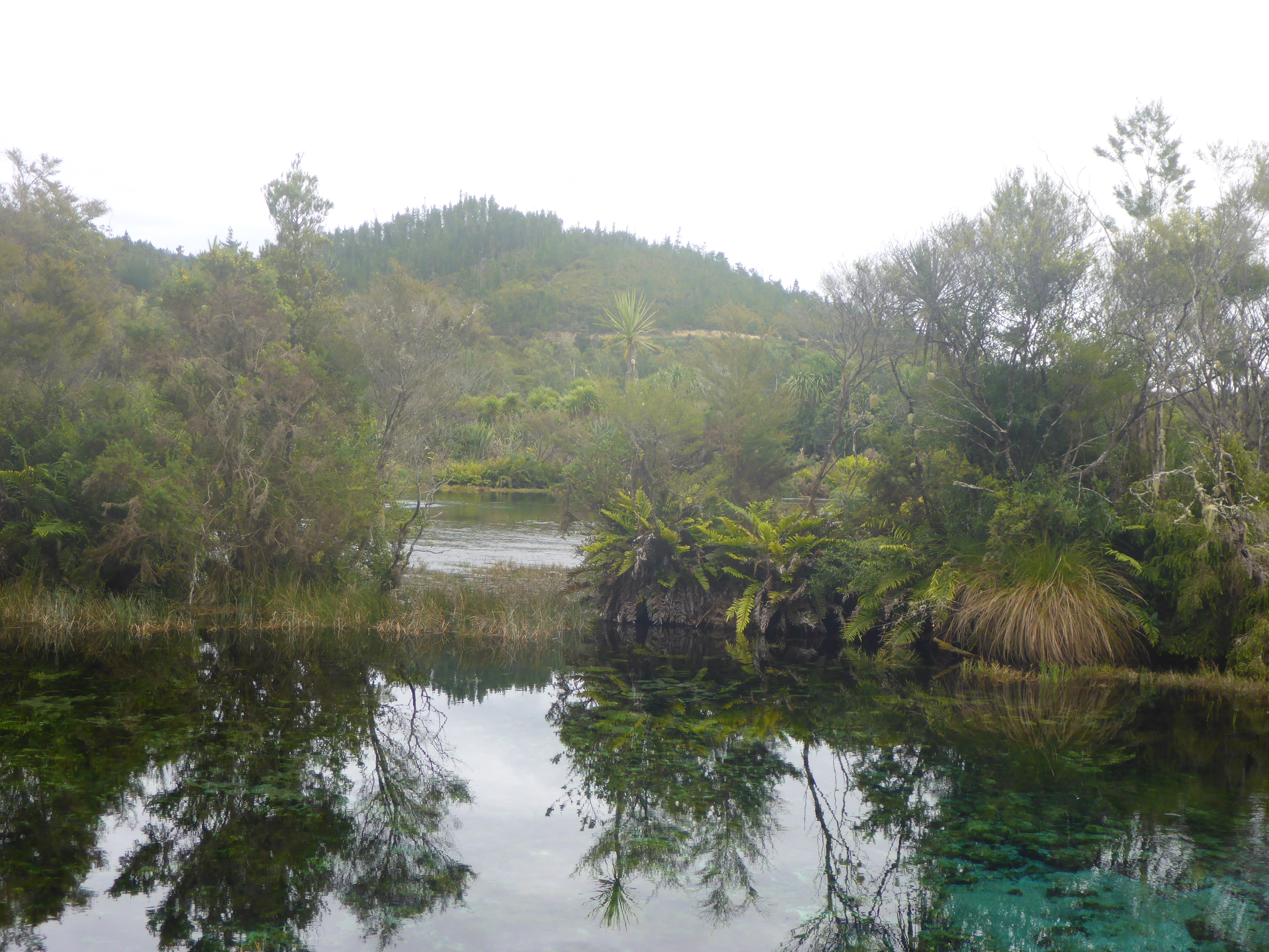 A scene at Waikoropupu Springs ;the water is said to be amongst the purest in the world
