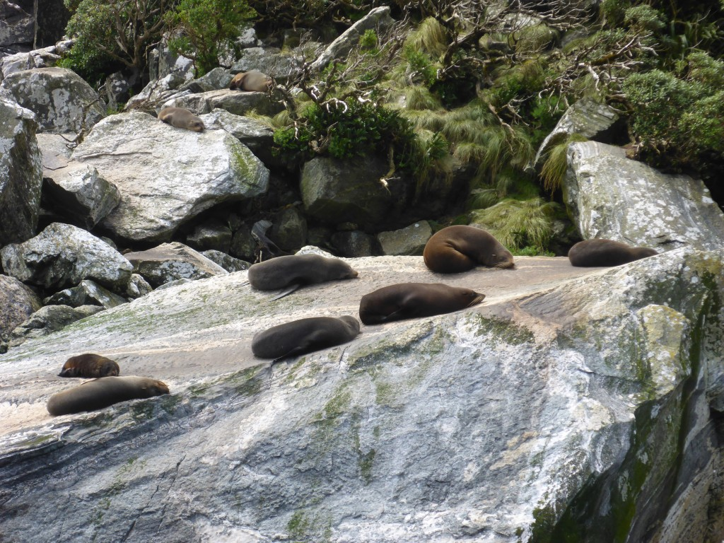 Penguins and dolphins were a no show on our trip. We did see plenty of fur seals but they tend to be rather static..